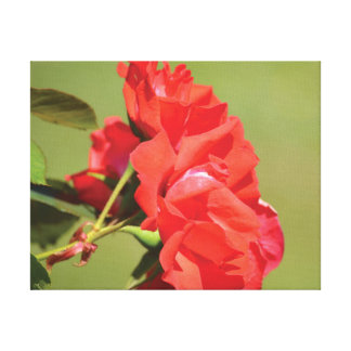 Beautiful close-up photo red rose on green canvas print