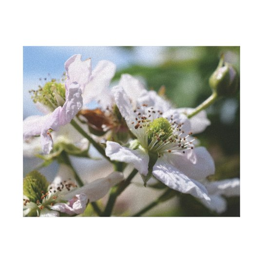 Beautiful close-up photo white blossom canvas print