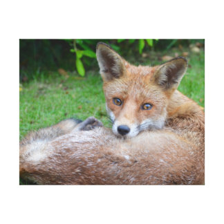 Beautiful close-up photograph of fox in garden canvas print