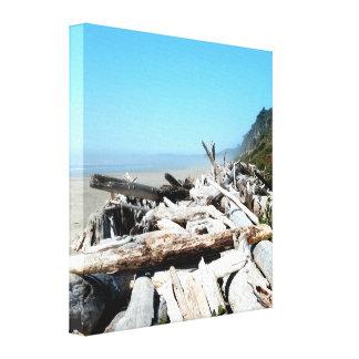Beautiful Coastal Driftwood Scene Canvas Print