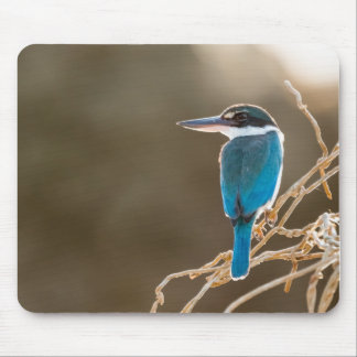 Beautiful Collared Kingfisher Mouse Pad
