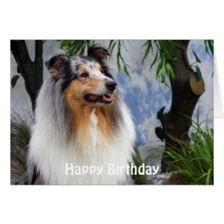 Beautiful Collie dog happy birthday greeting card