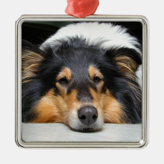 Beautiful Collie dog nose tri color ornament, gift Christmas Ornament