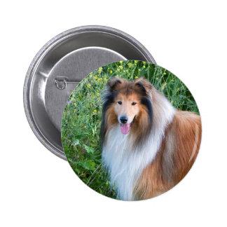 Beautiful Collie dog portrait button gift idea