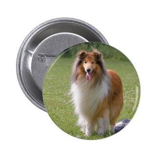 Beautiful Collie dog portrait button, gift idea 6 Cm Round Badge