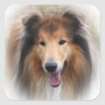 Beautiful Collie dog portrait sticker, gift idea Square Sticker