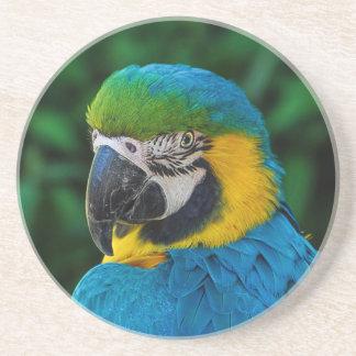 Beautiful colorful parrot portrait drink coaster