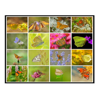 Beautiful colorful peacock butterfly collage postcard