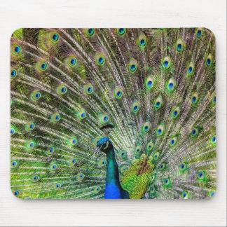 Beautiful, colorful peacock mousepad