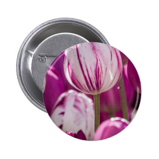 Beautiful colorful tulips at a green garden of Ist 6 Cm Round Badge