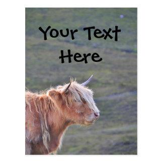 Beautiful Cow Cattle Heifer Long Hair Long Horn Postcard