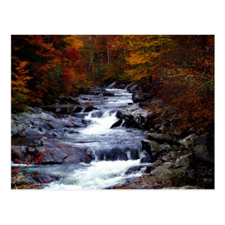 Beautiful creek nature scenery postcard