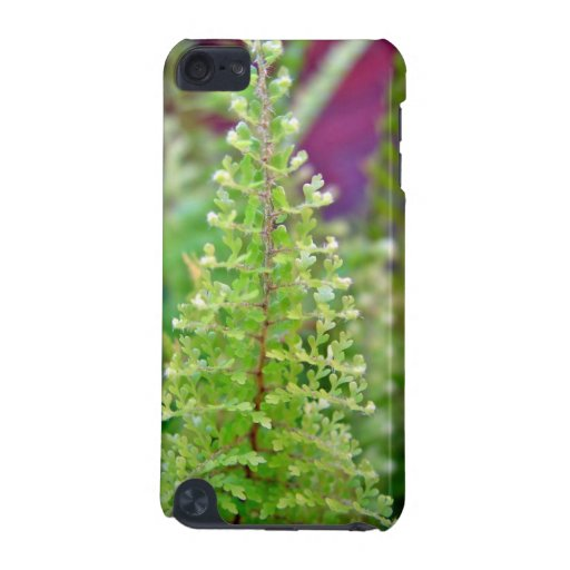 Beautiful Curly fern leaf iPod Touch (5th Generation) Covers
