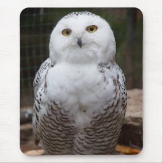 Beautiful cute  White snow owl bright eyes image Mouse Mat