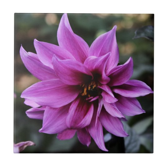 Beautiful Dahlia Flower Tile