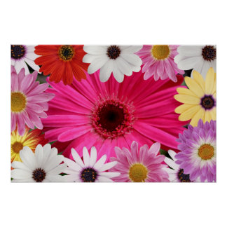 Beautiful Daisies Daisies Poster