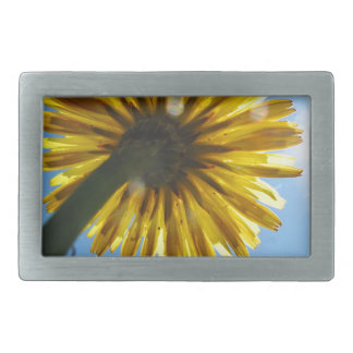 Beautiful Daisy flower looking to the sky Rectangular Belt Buckle
