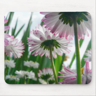 Beautiful daisy flowers photo mouse mat
