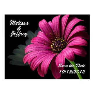 Beautiful Daisy Postcard