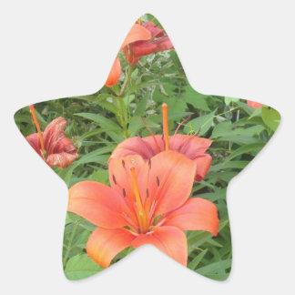 beautiful daylilies star stickers