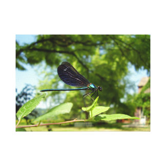 Beautiful Demoiselle Canvas Print