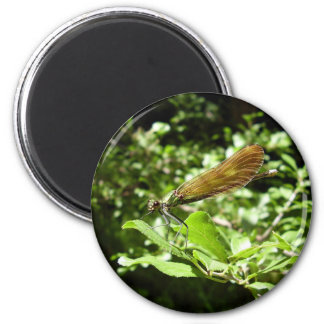 Beautiful Demoiselle Magnet