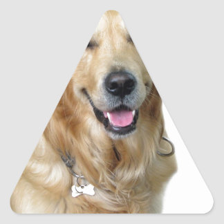 Beautiful Dog Golden Retriever and Your Bone Triangle Sticker