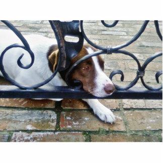 Beautiful Dog On Bricks Standing Photo Sculpture