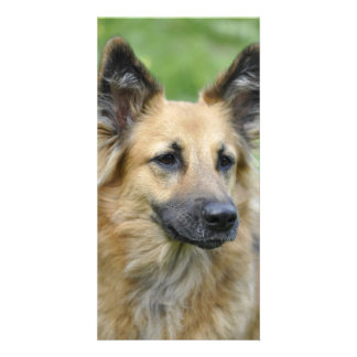 Beautiful Dog Personalized Photo Card