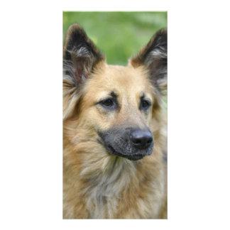 Beautiful Dog Personalized Photo Card