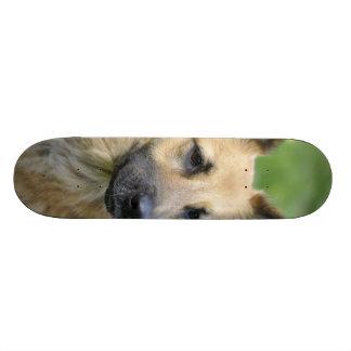 Beautiful Dog Skate Board