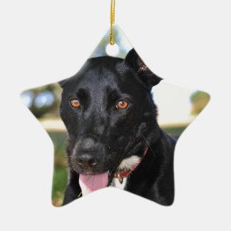 Beautiful dog with hazel eyes ceramic star decoration