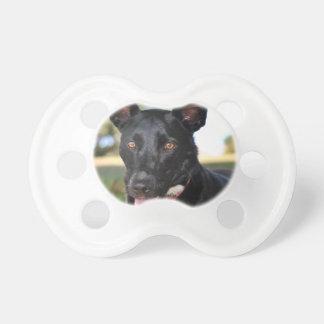 Beautiful dog with hazel eyes dummy