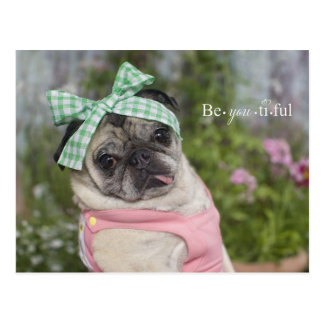 Beautiful dressed up Chinese pug image Postcard