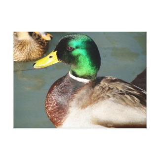 Beautiful Duck Canvas Print
