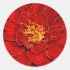 Beautiful Durango Red Marigold Classic Round Sticker