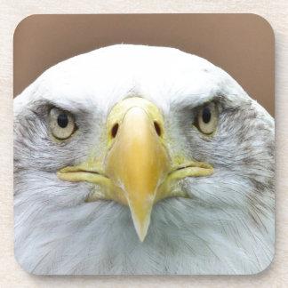 Beautiful eagle portrait coasters