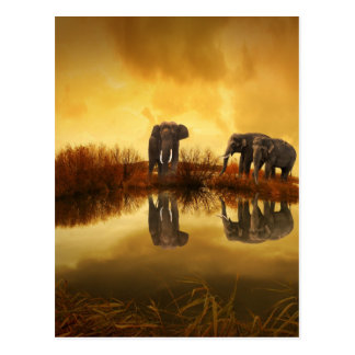 beautiful elephant Thailand sunset Postcard
