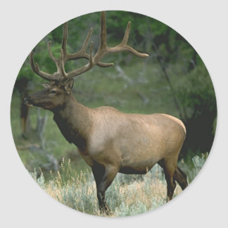 Beautiful Elk Classic Round Sticker
