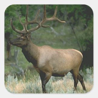 Beautiful Elk Square Sticker