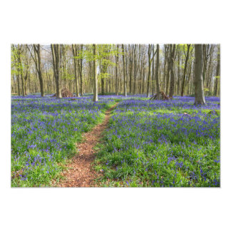 Beautiful English Bluebell Wood Photo Print