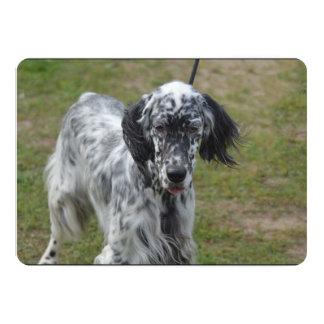 Beautiful English Setter Dog 13 Cm X 18 Cm Invitation Card