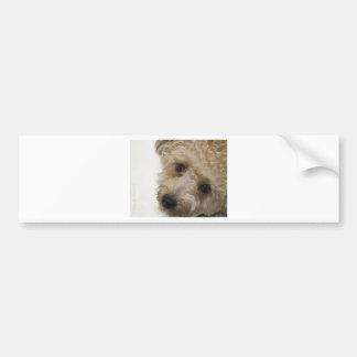 Beautiful Eyes of a Yorkie Poo Puppy Bumper Sticker
