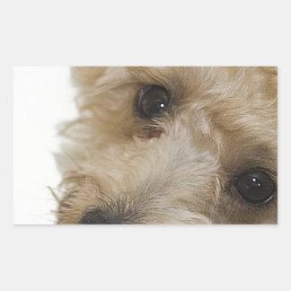 Beautiful Eyes of a Yorkie Poo Puppy Rectangular Sticker