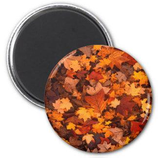 Beautiful Fall/Autumn Foliage Design 6 Cm Round Magnet