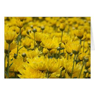 Beautiful Fall Chrysanthemum Floral Photo Card