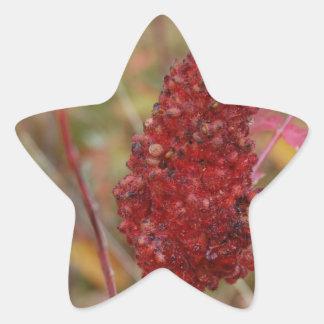 Beautiful Fall Nature Gift Star Stickers