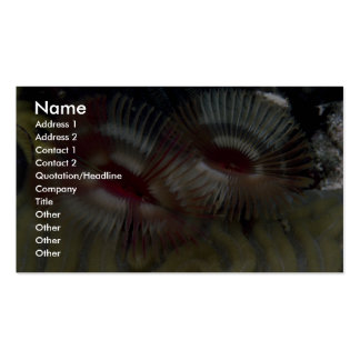 Beautiful Fan worms adorn a Caribbean coral reef Pack Of Standard Business Cards