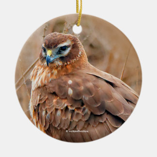 Beautiful Female Northern Harrier in the Marsh Christmas Ornament