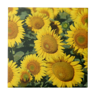 Beautiful Field of Sunflowers Tile